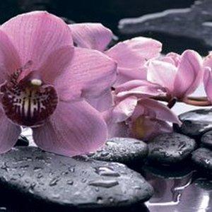 MSK Орхидеи на камнях