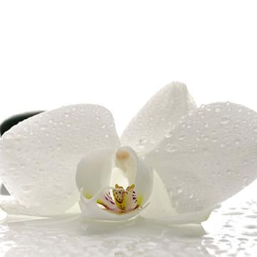 MSK Белые орхидеи